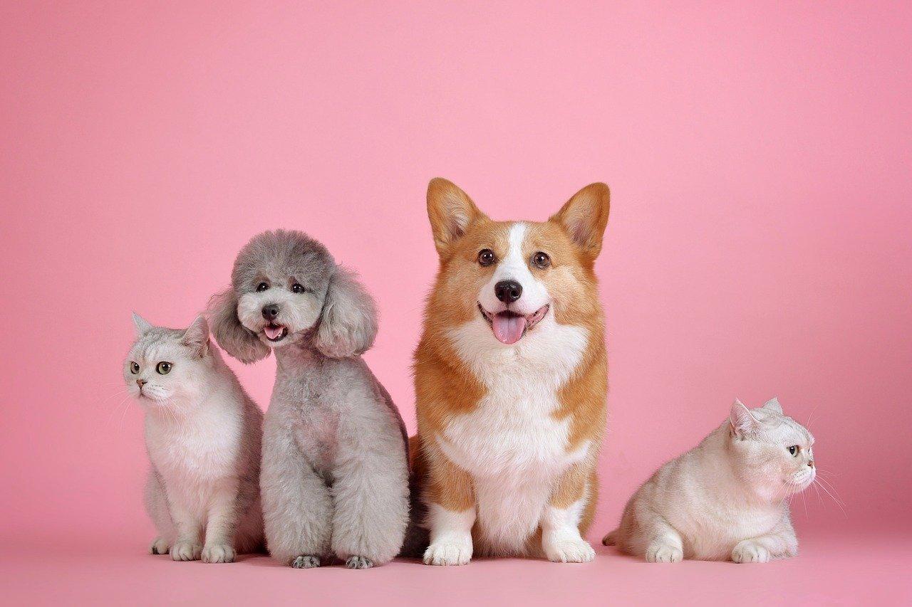 Quels sont les aliments à éviter pour un chien ?